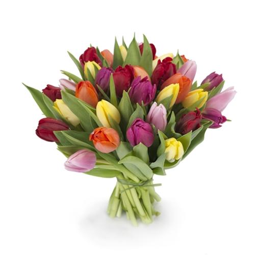 Blumen Und Pflanzen Online Bestellen blumenversand online