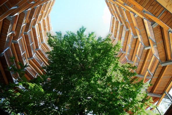 Innerhalb des Baumwipfelpfads - Naturerbe Rügen