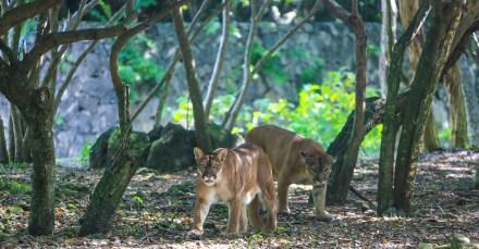 xcaret_naturpark_mexico_erfahrungsbericht_worldtravlr_net-6