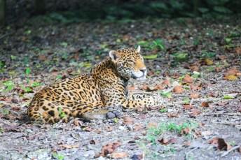 xcaret_naturpark_mexico_erfahrungsbericht_worldtravlr_net-7