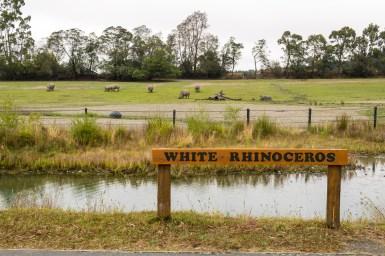 Orana Wildlife Park - Rhinoceros