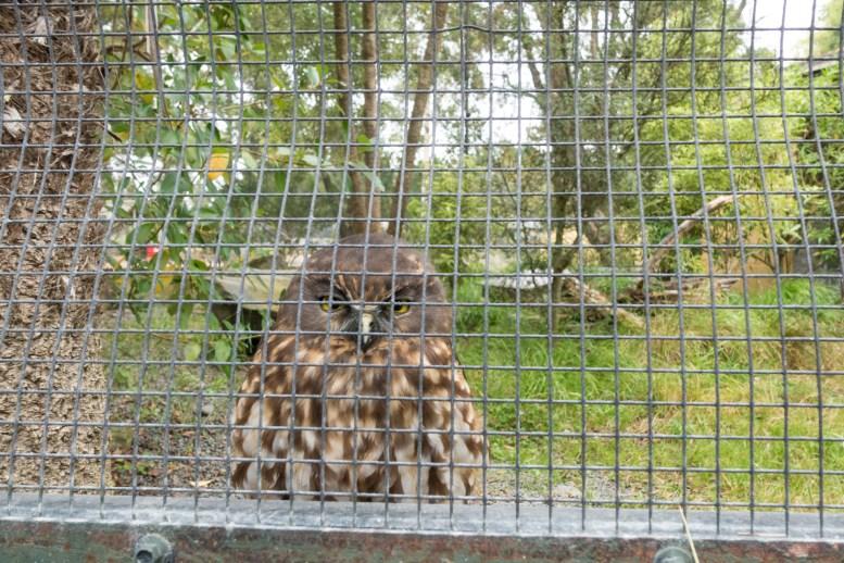 Orana Wildlife Park - Eule