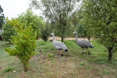 Orana Wildlife Park - Gans