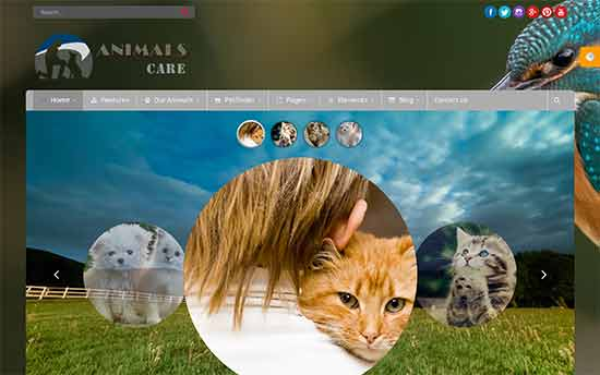 Animals Care