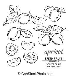 Lemongrass vector set. Lemongrass plant vector