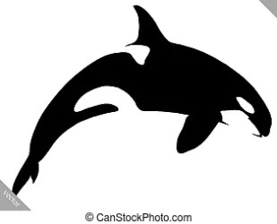 Orca Vector Clipart Illustrations 1 421 Orca clip art vector EPS drawings available to search from thousands of royalty free illustrators