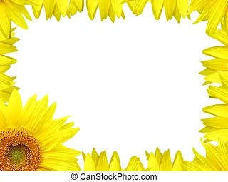 sunflower illustrations and stock