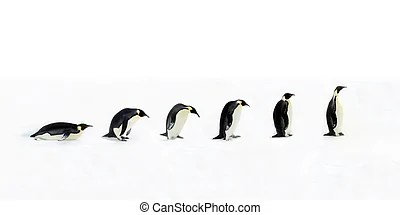 Penguins Stock Photo Images. 18,636 Penguins royalty free