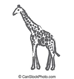 Giraffa Illustrations and Stock Art. 204 Giraffa