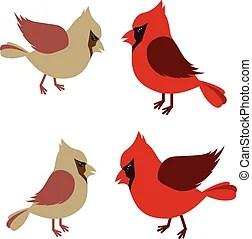 cardinalis vector clipart eps