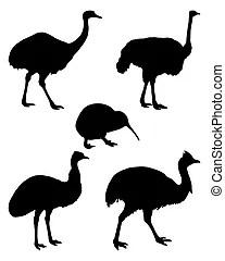 Emu Illustrationen und Clip Art. 632 Emu Lizenzfreie