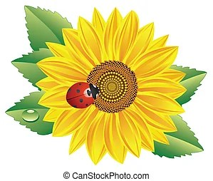 ladybird clip art and stock illustrations