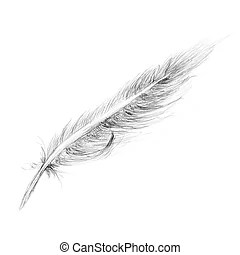 Feather Stock Illustration Images. 76,910 Feather