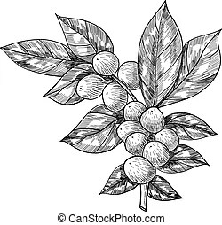 Green bean Illustrations and Clipart You'll Love. 4,363