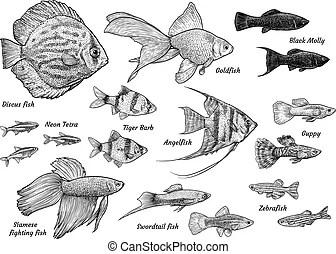 Guppies Clipart Vector Graphics. 247 Guppies EPS clip art