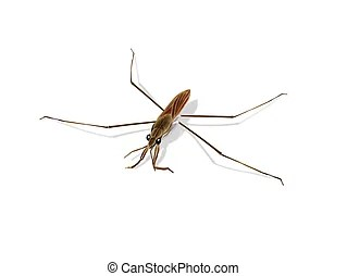 pond skater illustrations and stock