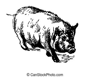Domestic pig Stock Illustration Images. 6,689 Domestic pig