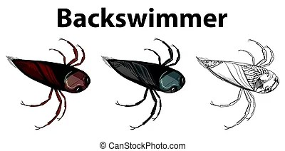 backswimmer clipart and stock illustrations
