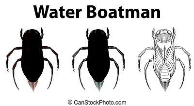 boatman illustrations and clipart