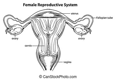 Reproductive Illustrations and Clip Art. 4,441