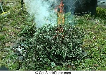 burning bush strauch # 73