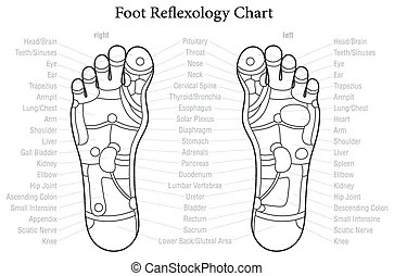 blank foot diagram 1995 evinrude 115 wiring schematic feet all data upper respiratory system podiatry