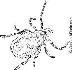 House dust mite. Clearly labeled vector illustration of