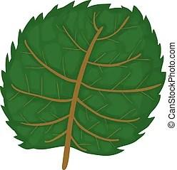 linden leaf illustrations and stock