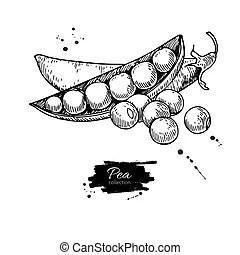 Corn hand drawn vector illustration set. isolated