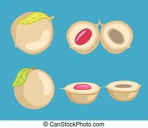 peach fruit vector clipart eps