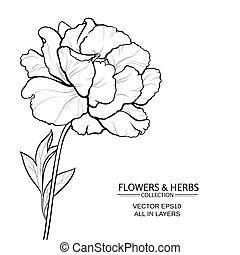 Turmeric vector illustration. Turmeric plant vector