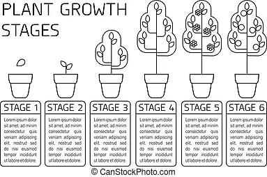 Leaf stages Clip Art Vector and Illustration. 539 Leaf