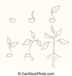 Crocus flower plant growth evolution concept. Flower plant