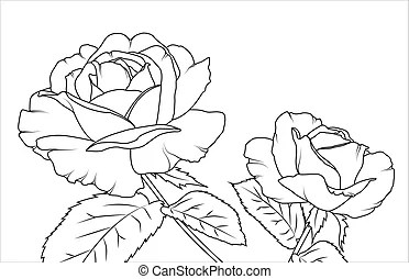 Blooming rose, hand-drawing. vector illustration. clipart