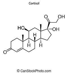 Cortisol molecule. Optimized molecular structure of
