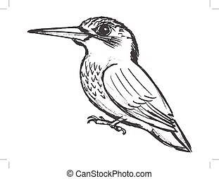 Kingfisher Illustrations and Stock Art. 303 Kingfisher