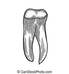 Wisdom tooth Vector Clip Art Royalty Free. 572 Wisdom