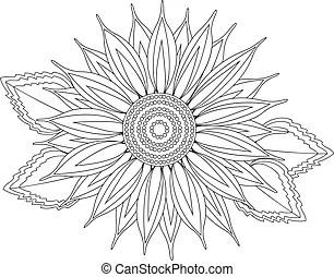 Vector sunflower. Vector illustration of sunflower.