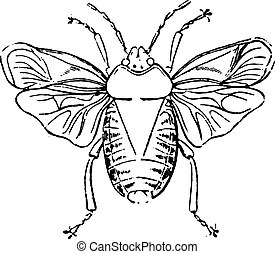 hemiptera vektor clipart illustrationen