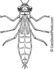 Libélula, ninfa. Ninfa, ilustración, libélula.