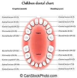 牙醫美工與插圖。53793牙醫提供由數千位免版稅美工圖像設計師所創作之向量 EPS 插圖和圖示供您搜尋。