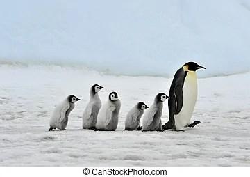 企鵝照片和圖片。34221企鵝提供由數千位攝影師所拍攝之照片和免版稅攝影作品供您搜尋。
