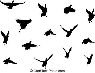 海鷗. 圖畫. 黑色. 被隔離. white.