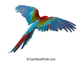 鸚鵡 圖像, 向量圖形&素材圖片 | Can Stock Photo