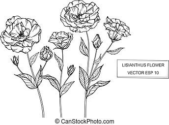 Lisianthus Illustrazioni e clipart.49
