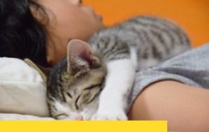 跟寵物一起睡,床墊的灰塵、塵螨、細菌量翻倍!過敏容易加重,床墊清洗可以解決嗎?
