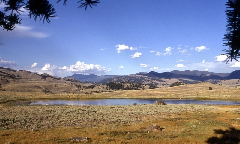 Yellowstone National Park TowerRoosevelt  AllTrips