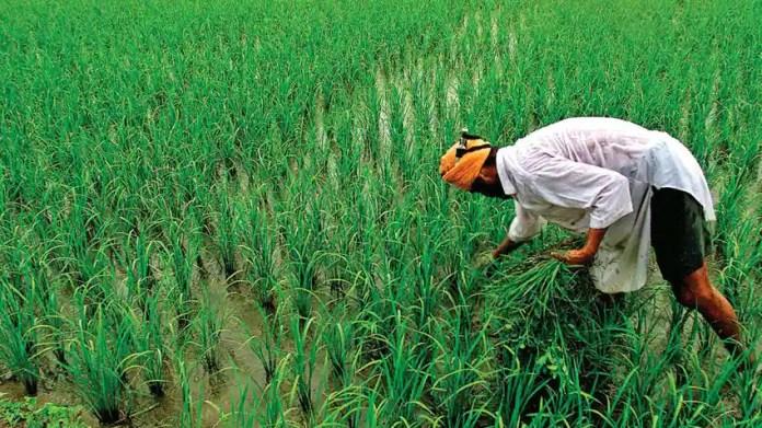 बड़ी खबर- किसानों को मोदी सरकार का तोहफा, खरीफ फसलों की MSP में जबरदस्त इजाफा | Zee Business Hindi