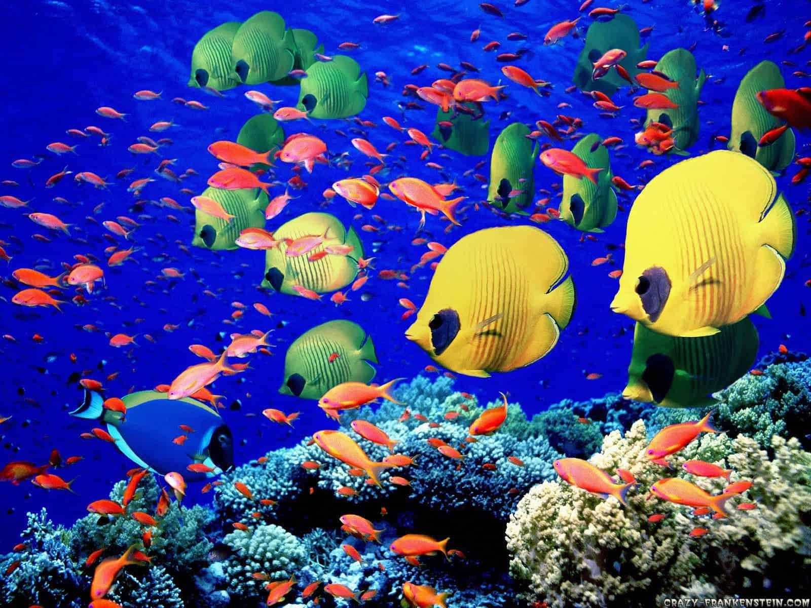 New Study Estimates 1 Million Marine Species