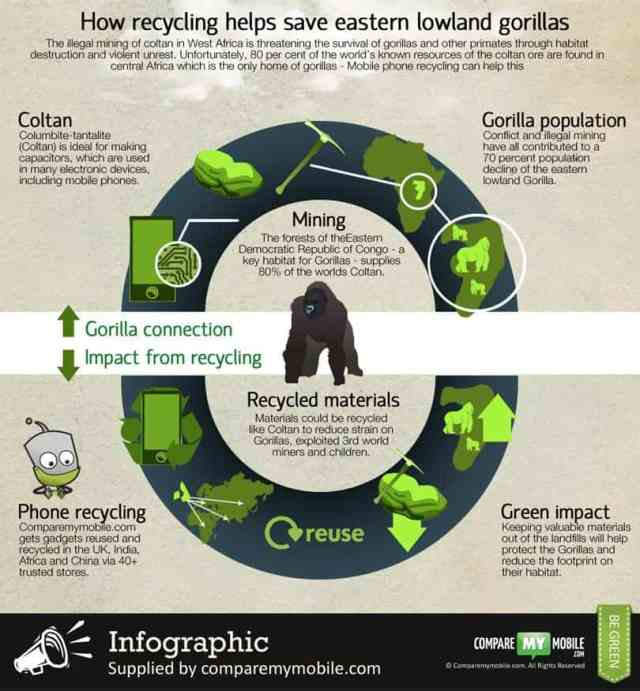 Can phone recycling help save the Eastern African Gorilla?